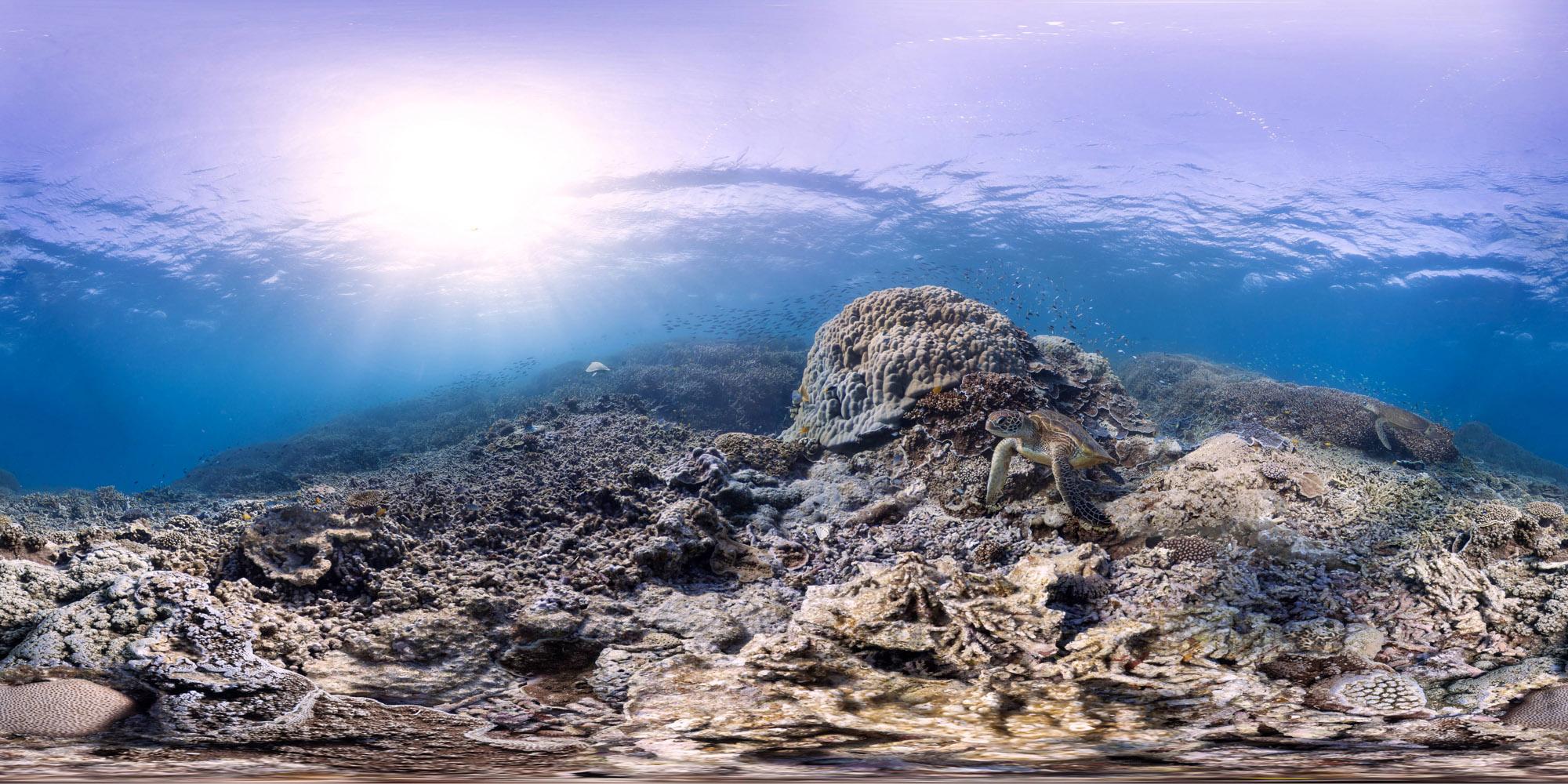 Underwater Heron Island